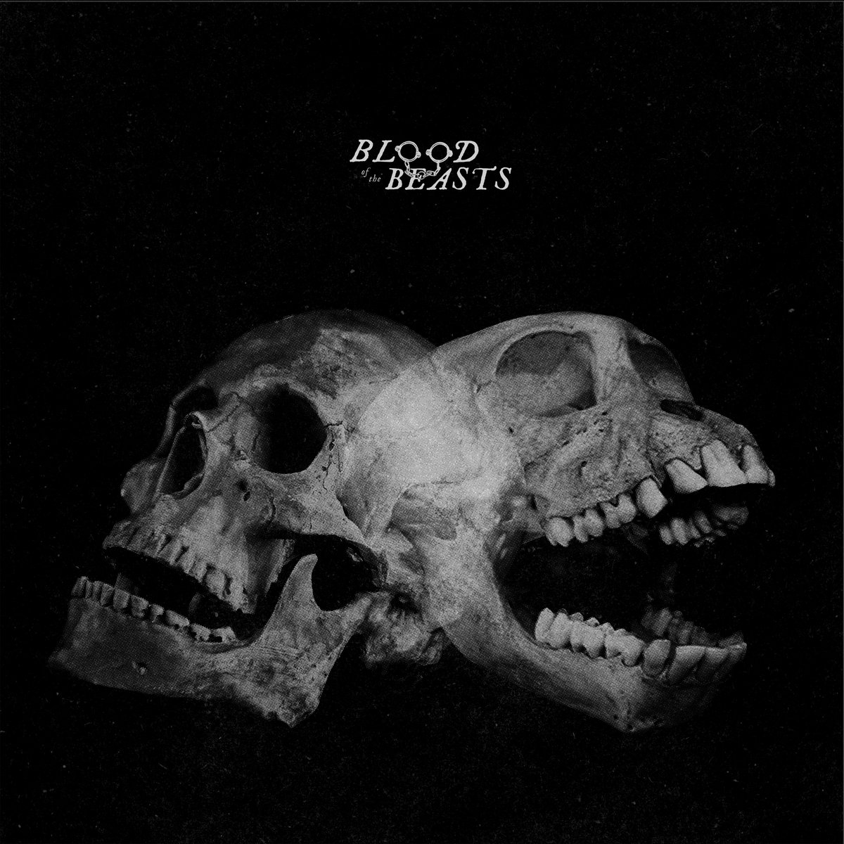 Review: Sect – Blood of the Beast
